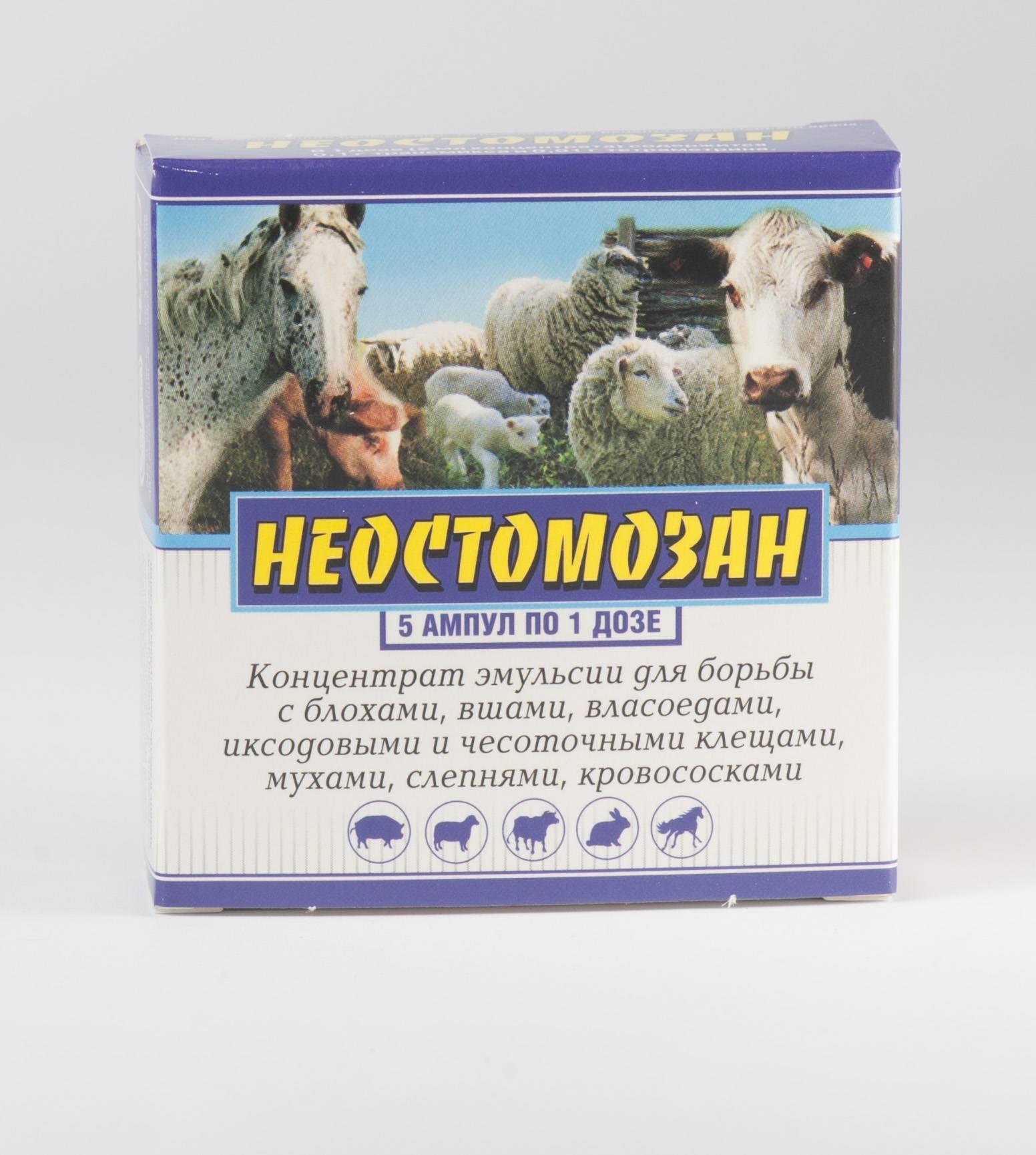 Вши у телят и коров: признаки, лечение, профилактика