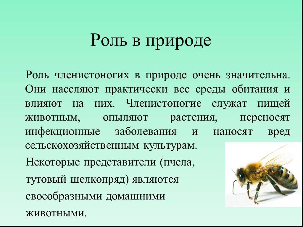 Зачем нужны осы и есть ли от них польза