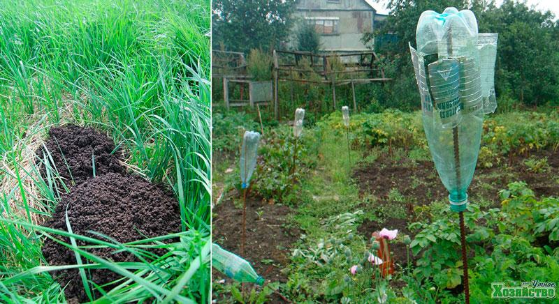 Как надежно избавиться от кротов на дачном или садовом участке