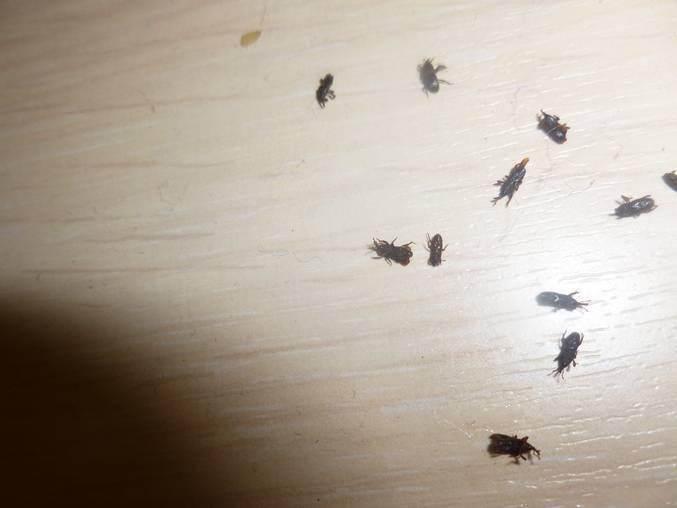Эффективные способы борьбы с маленькими коричневыми жучками в доме