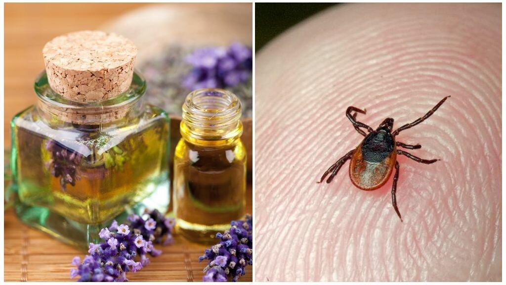 Народные средства от клещей: как защититься от них с помощью ванилина, дегтя, растений и других методов