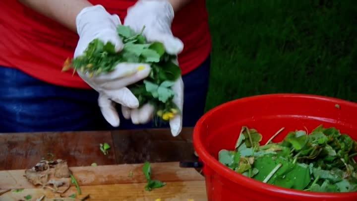 Чистотел против вредителей сада