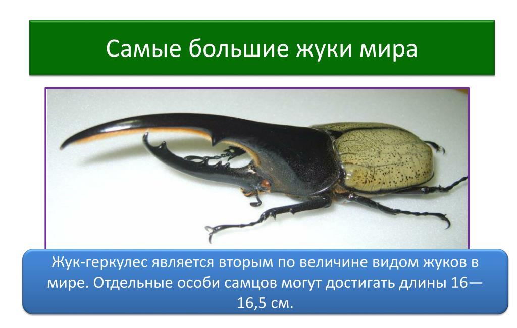Лютка дриада — стройная стрекоза у мелких озер
