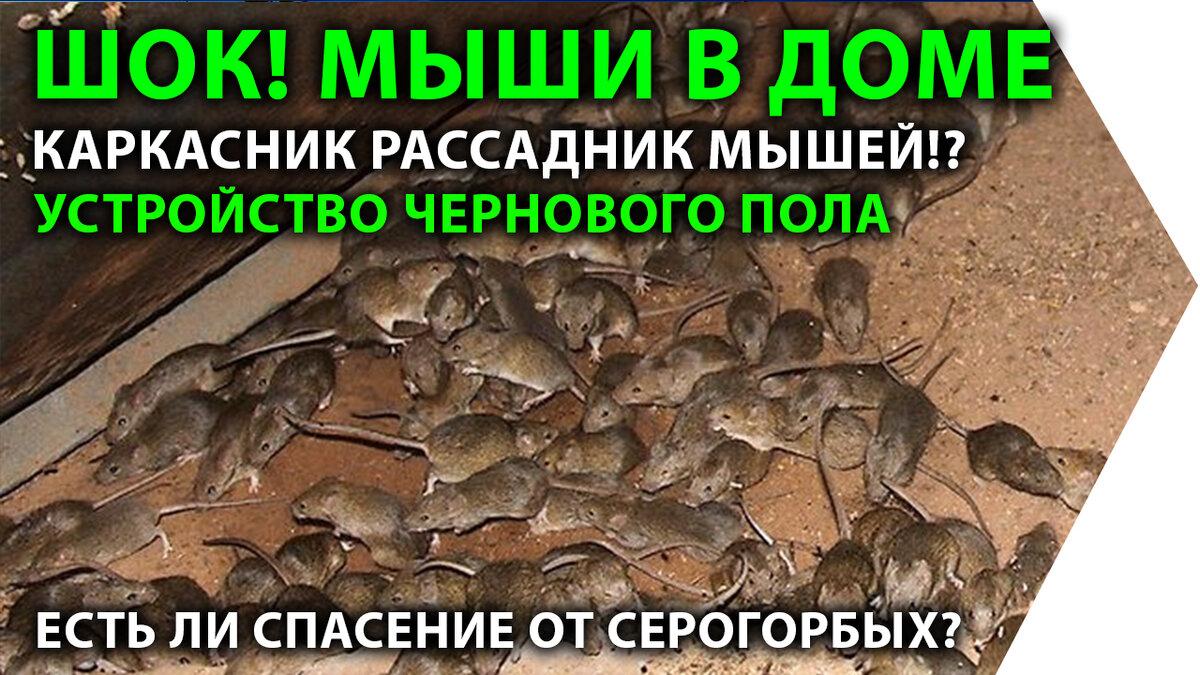 Как защитить каркасный дом от мышей при строительстве с помощью сетки
