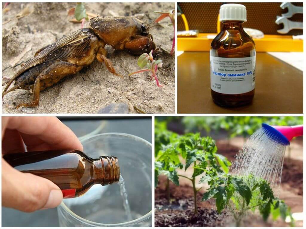 Нашатырный спирт от муравьев на даче / как избавится от насекомых в квартире
