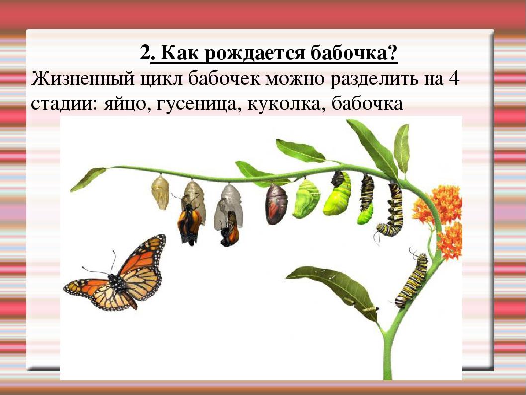 Вредители капусты и капустных корнеплодов