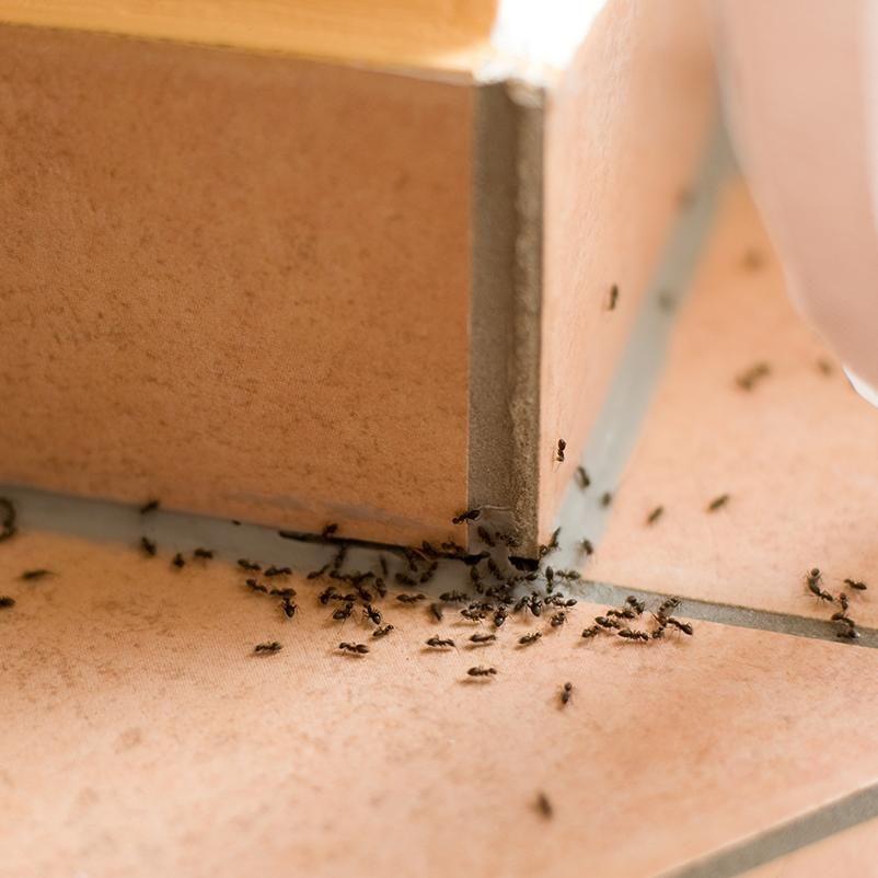 Утеплитель пеноплекс или дом для муравьев