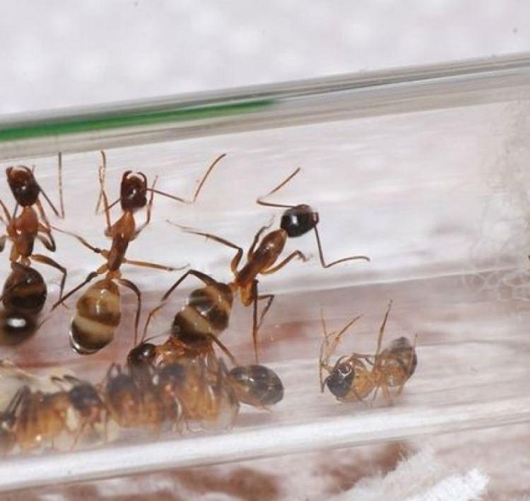 Как избавиться от муравьев? способы, описание, фото и видео