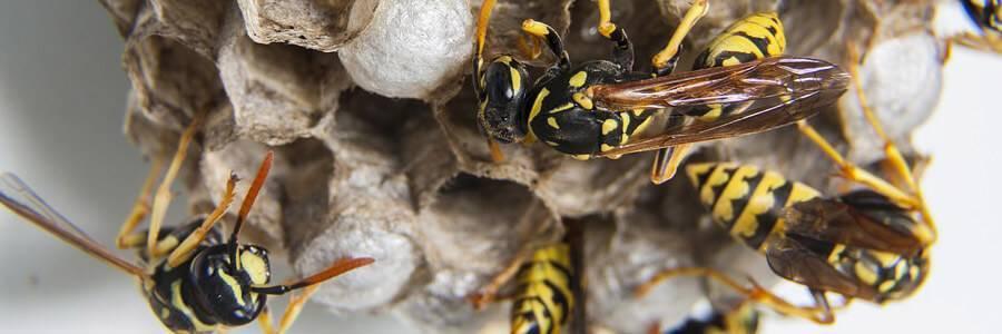 Осы на даче: как избавиться от насекомых проверенными методами своими руками, техника безопасности