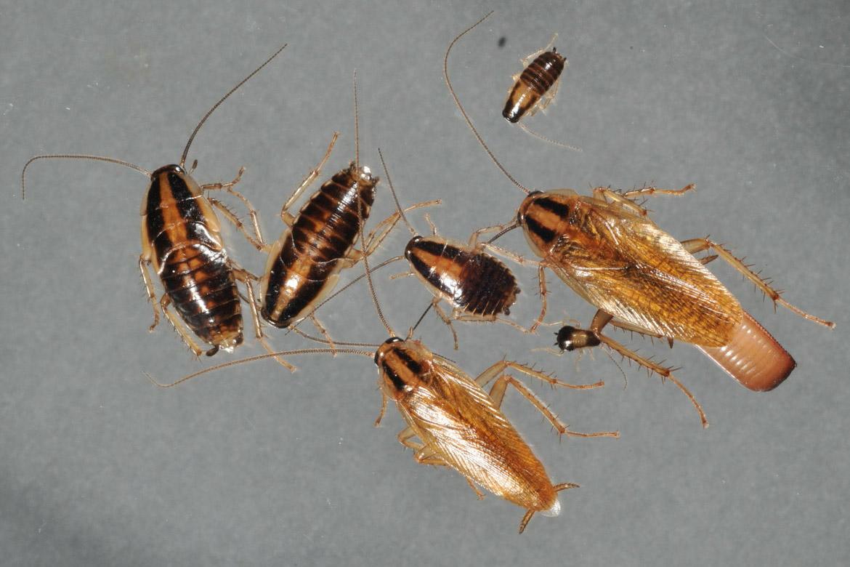 Тараканы на кухне мы принимаем бой