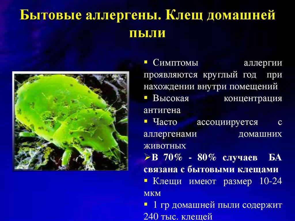 Аллергия на пылевого клеща   симптомы и лечение аллергии на пылевого клеща   компетентно о здоровье на ilive