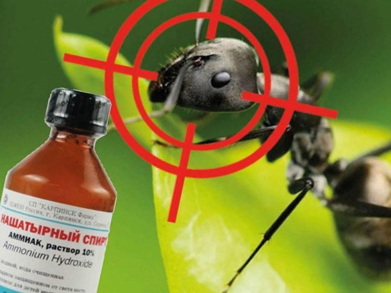 Как в огороде избавиться от муравьев народными средствами: быстро и навсегда