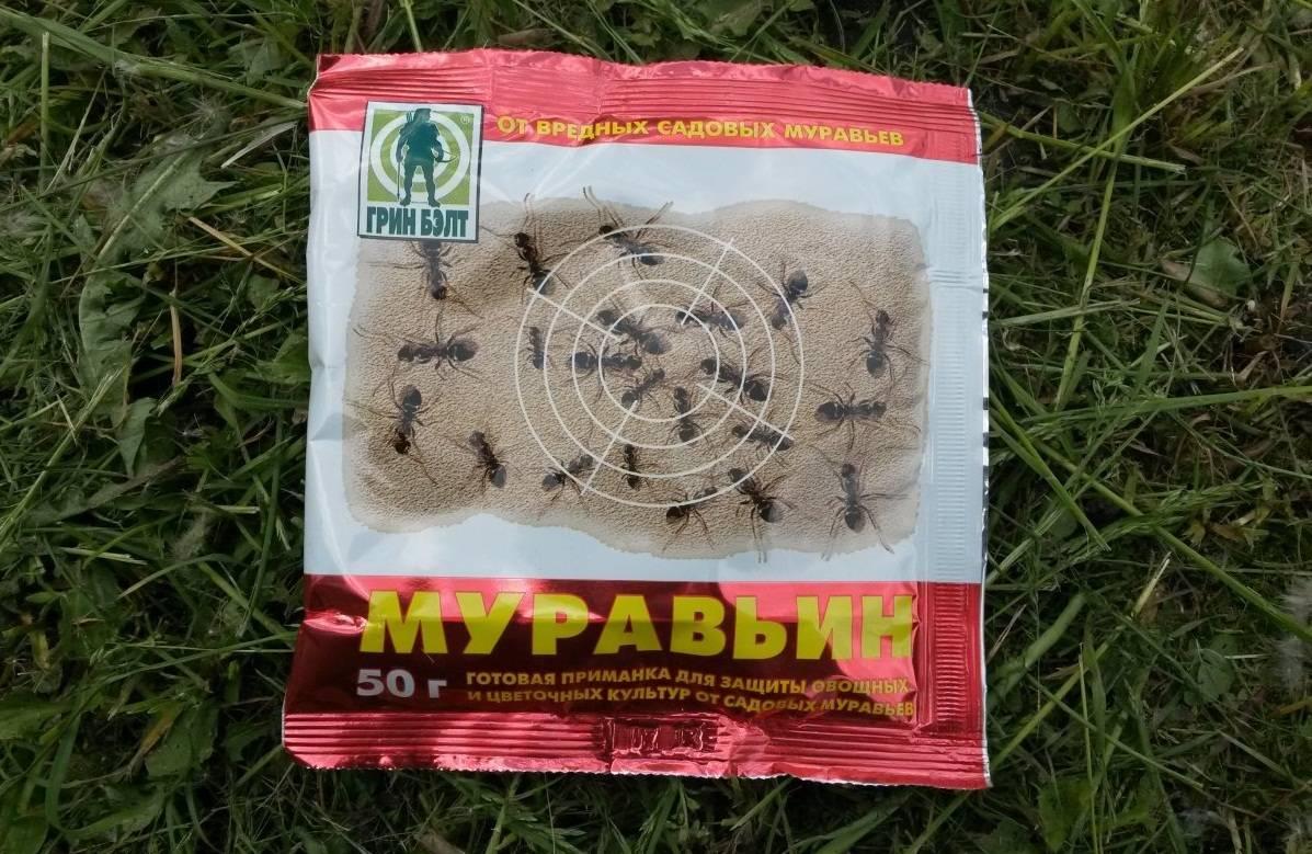 Как избавиться от муравьев на садовом участке - проверенные народные средства