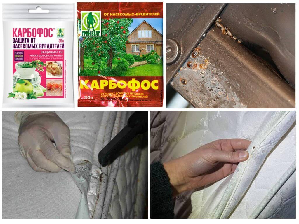 Карбофос: как применять от вредителей в садоводстве, на огороде и дома