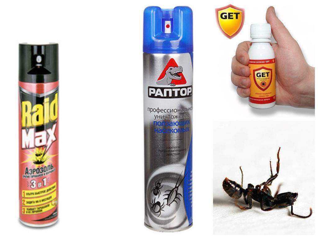 Как избавиться от мокриц в квартире промышленными средствами и народными методами