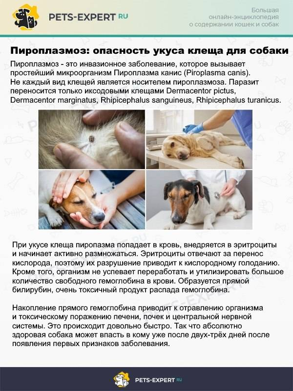 Энцефалит у собак: диагностика, лечение и последствия