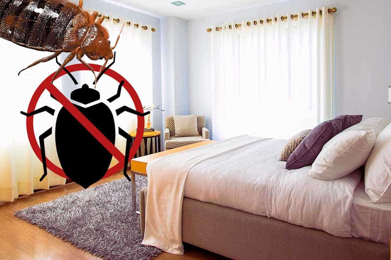 Как вывести клопов из квартиры навсегда в домашних условиях