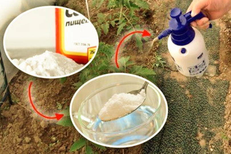 Пищевая сода: применение на огороде и в саду. как использовать соду на огороде