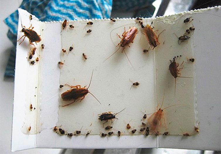 Как бороться с тараканами в общежитии: чем лучше травить
