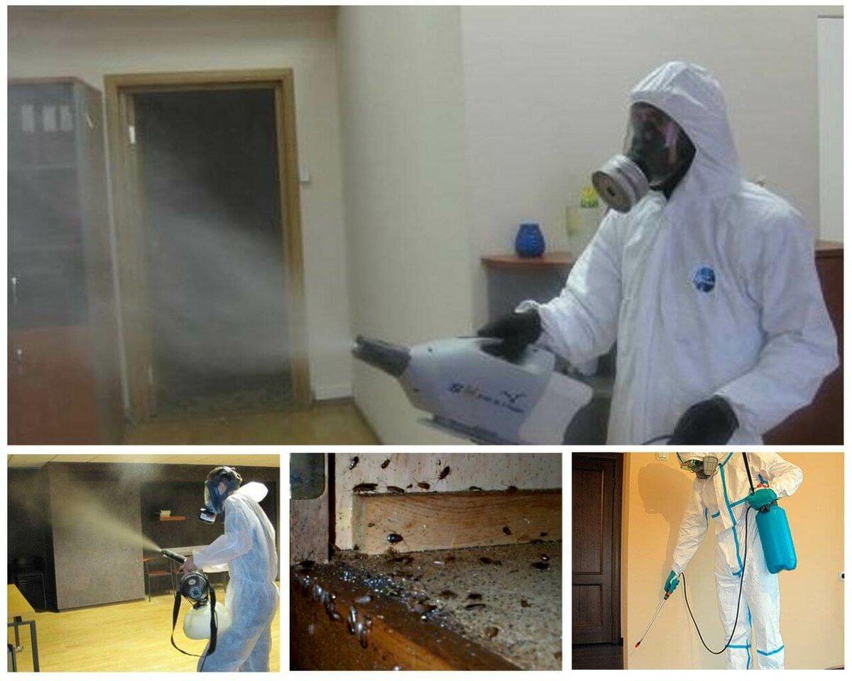 Как избавиться от тараканов в общежитии: методы борьбы с паразитами