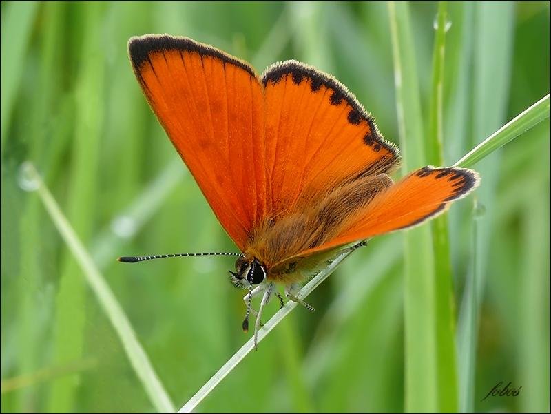 Бабочка - 118 фото древнего насекомого от куколки до взрослой особи