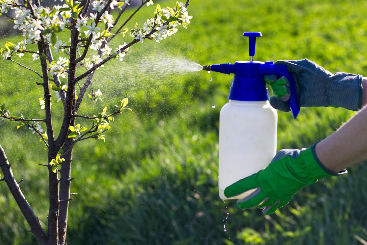 Обработка хозяйственным мылом сада. водка, кока кола, нашатырный спирт от тли: эффективные средства борьбы с вредителем