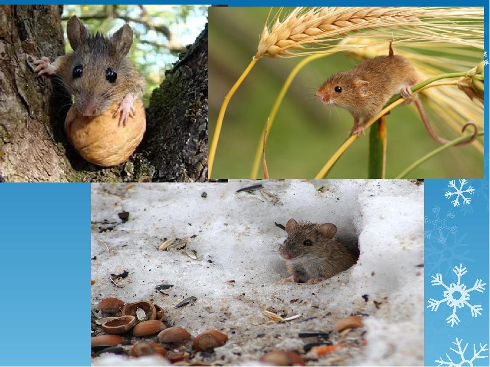 Как зимуют муравьи - питание, диапауза, спячка