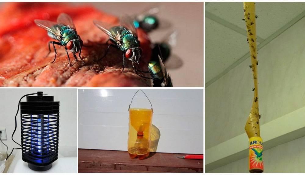 Как избавиться от плодовой мушки в квартире: современные средства и народные способы