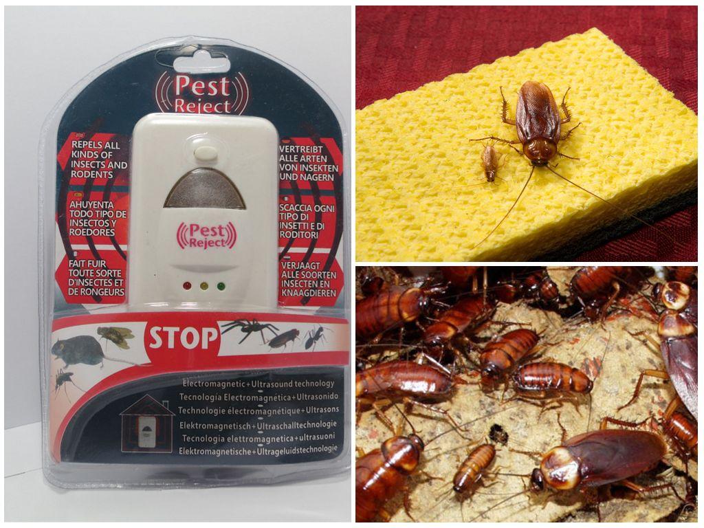 Pest reject от клопов: отзывы покупателей, характеристики, правила использования