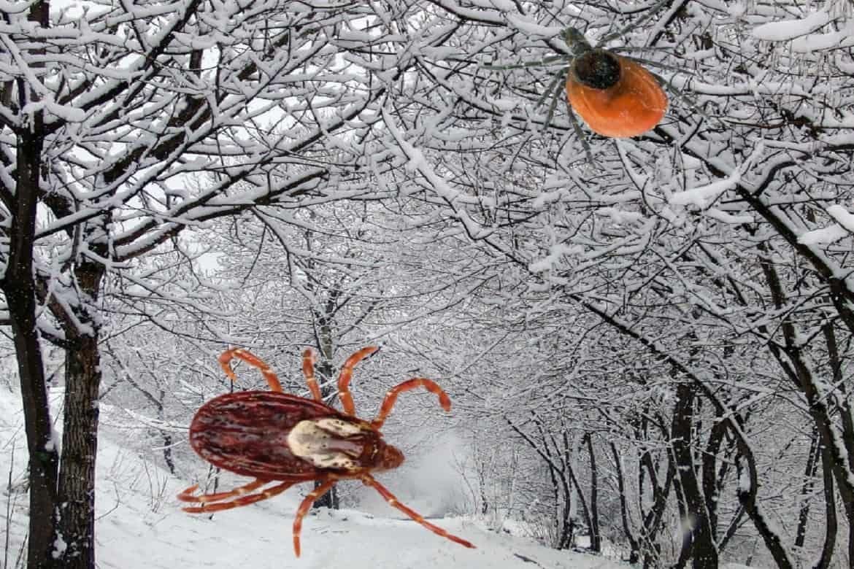 При какой температуре появляются клещи — parazit24