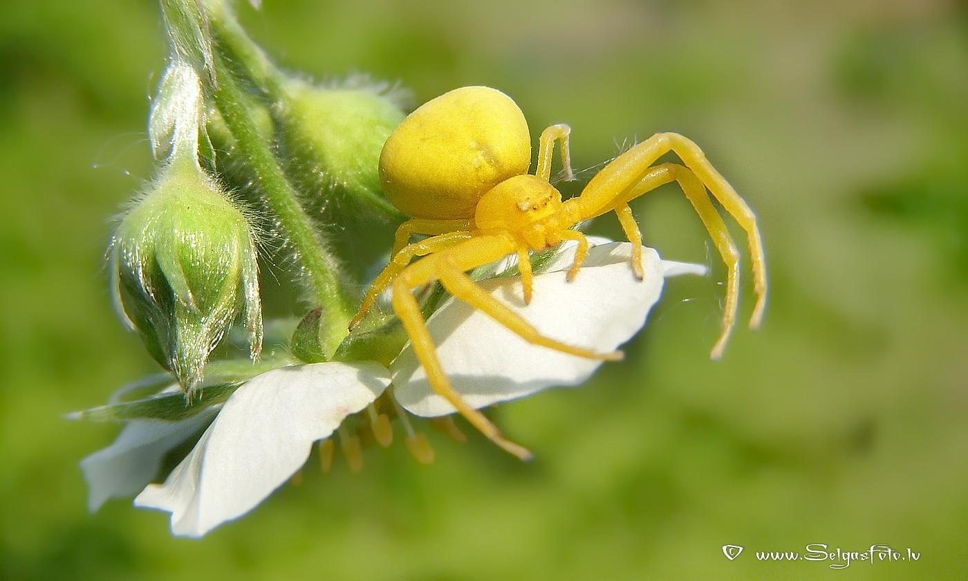 Сколько лет живёт паук-птицеед: продолжительность жизни в домашних условиях