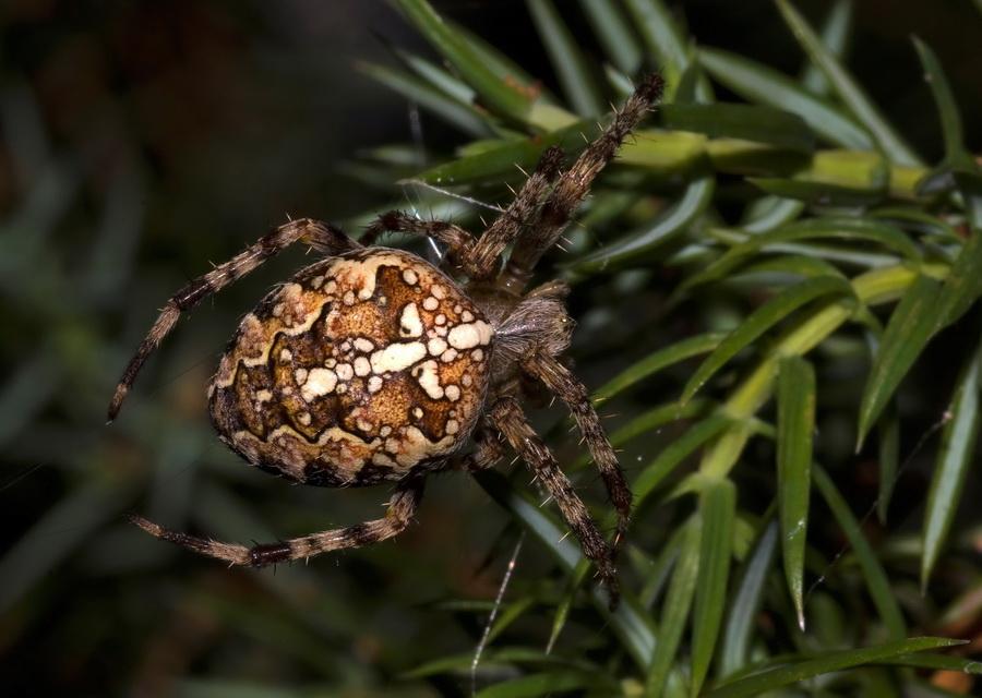 Виды пауков с названиями и описанием +фото, опасность для человека   golubevod.net
