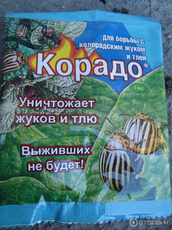 Корадо от колорадского жука: инструкция по применению, как развести для картофеля, отзывы