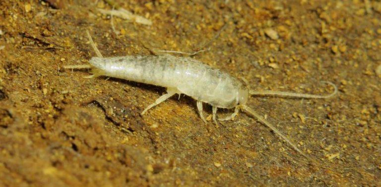 Что делать, если в ванной завелись маленькие белые насекомые?