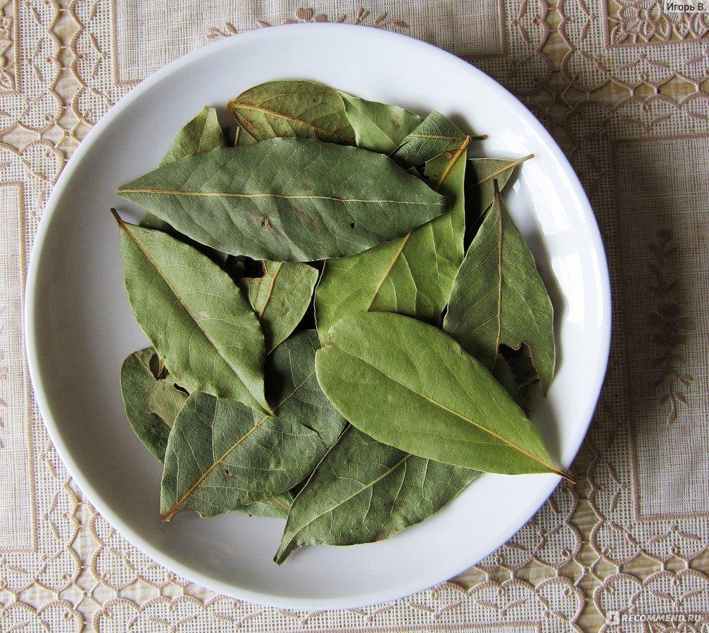 Лавровый лист от тараканов - как использовать, отзывы