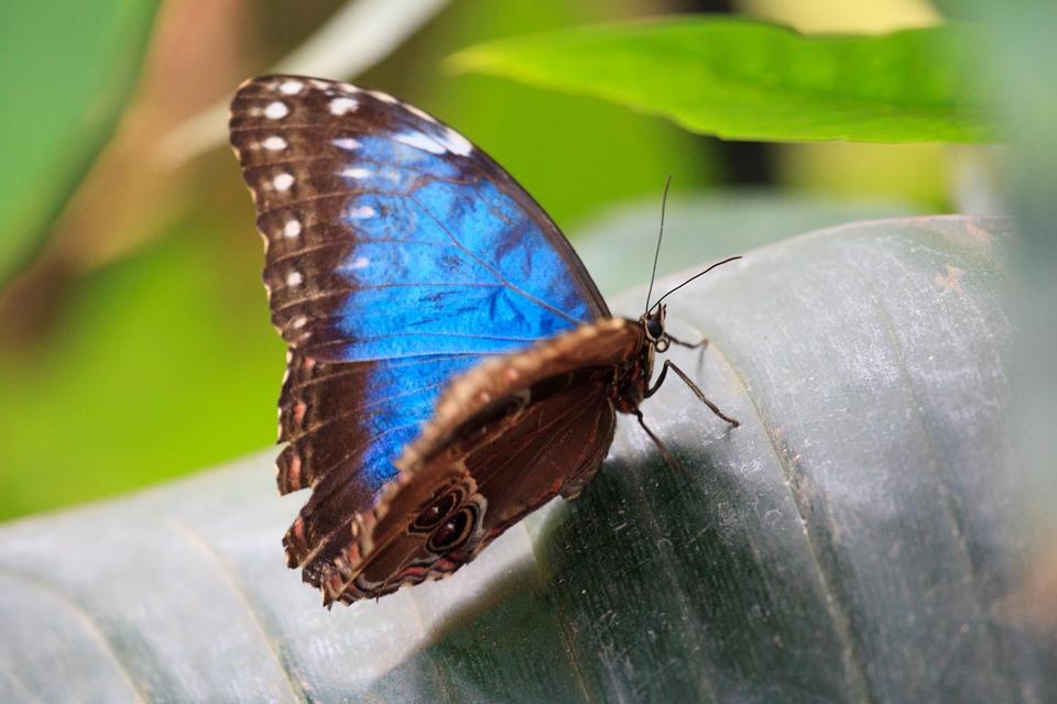 """Презентация на тему: """"бабочки тропических лесов южной америки"""". скачать бесплатно и без регистрации."""