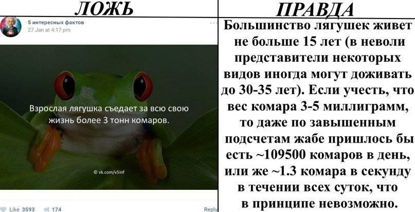 Интересные факты о клещах | vivareit