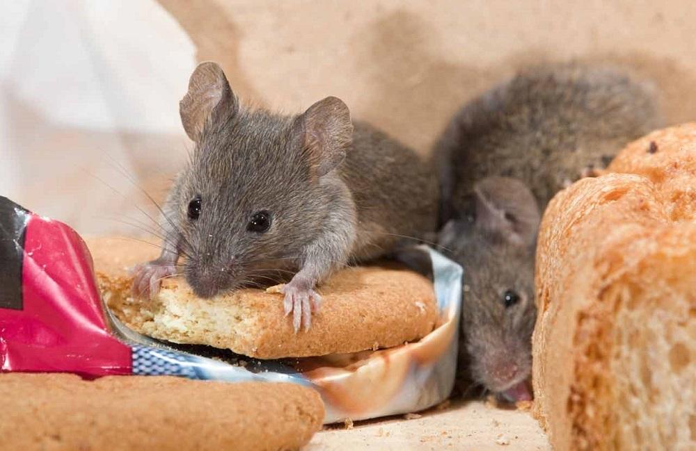 Кто ест мышей из животных