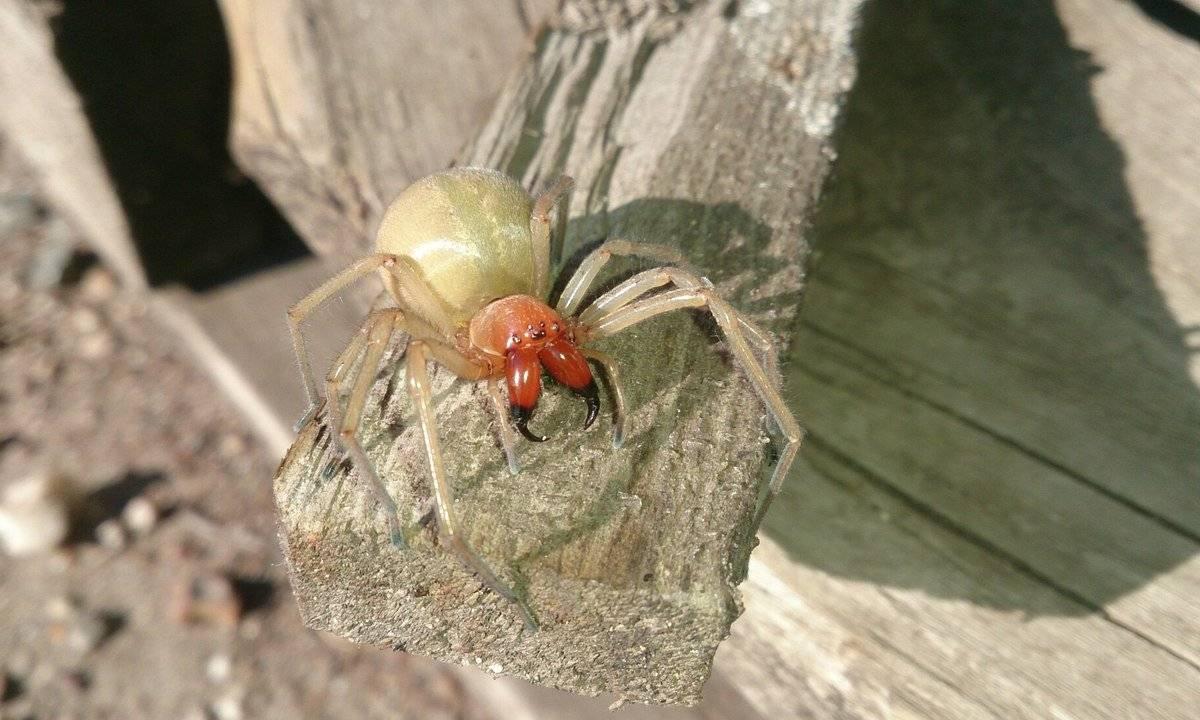 Укус паука: фото поражения кожи, симптомы, первая помощь и лечение укуса паука