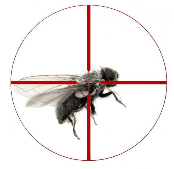 Читать книгу как убить муху владимира дэса : онлайн чтение - страница 1