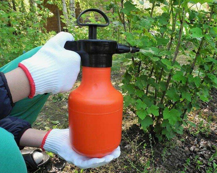 Как избавиться от муравьев народными средствами: новости, сад, огород, усадьба, муравьи, сад и огород