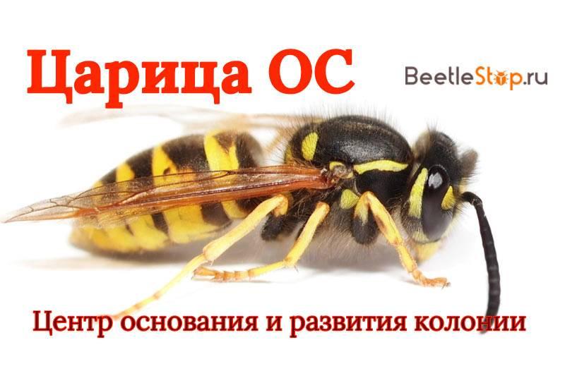 Аллергия на укус пчелы – признаки и лечение