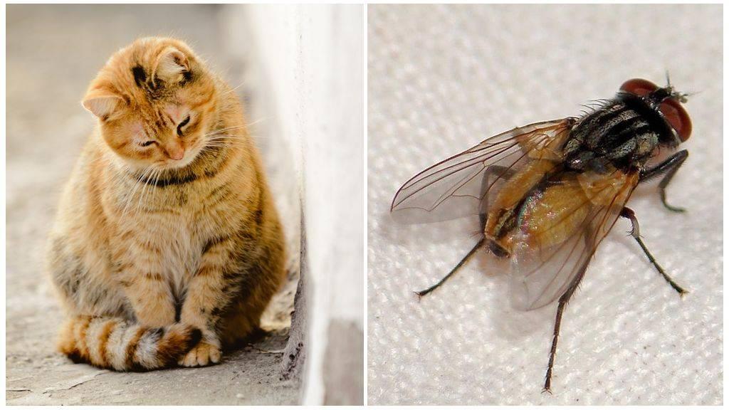 Что делать, если кот или кошка съели муху?