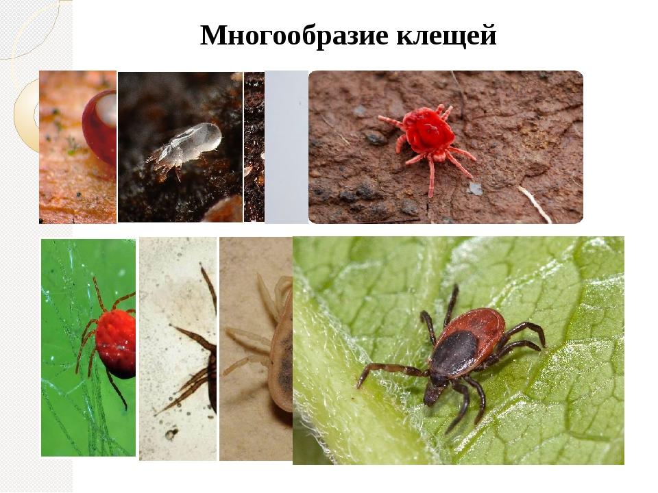 Почвенные (корневые) клещи: почему появляются в земле у комнатных растений, как их можно обнаружить и как от них избавиться