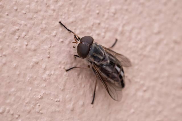 Почему мухи держатся на потолке