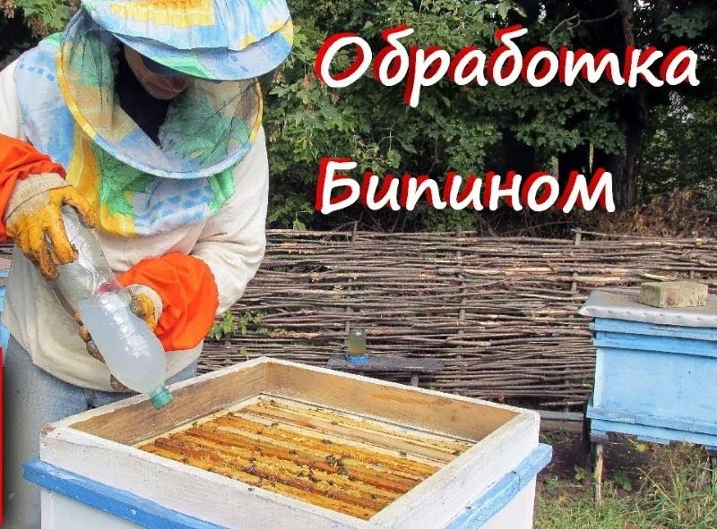 """Обработка пчел """"Бипином"""" осенью: инструкция и дозировка"""