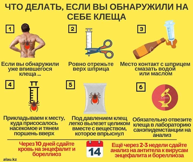 Как вытащить клеща у человека: инструкция удаления, обработка раны