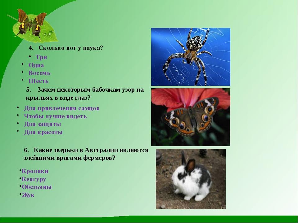 Сколько ног у паука и какую роль они выполняют? почему паук не путается в своей паутине?