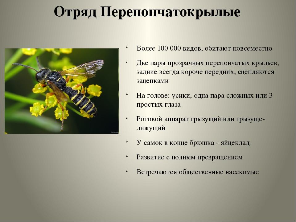 Где зимуют и чем питаются осы? / как избавится от насекомых в квартире