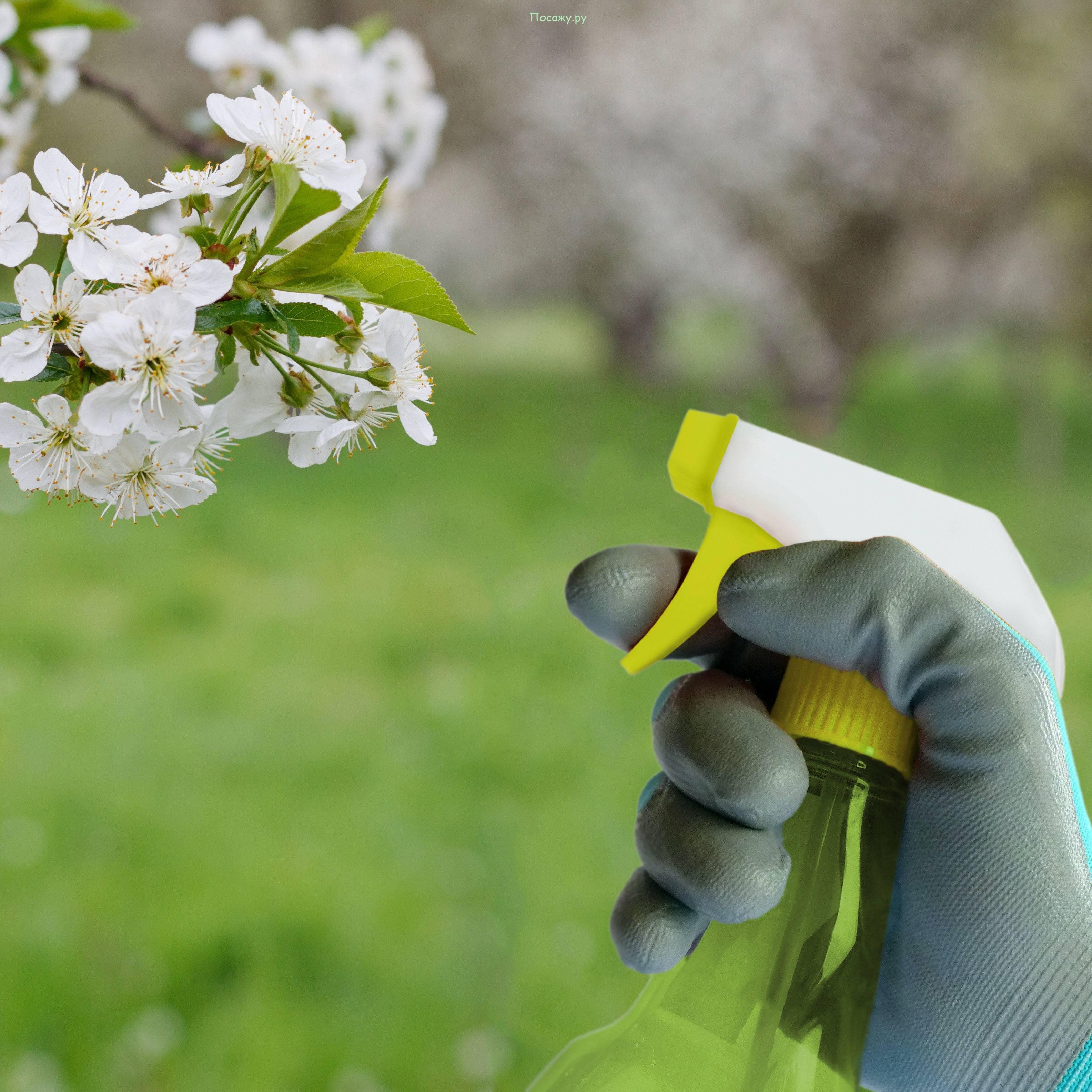 Тля на яблоне - как бороться народными средствами, препараты